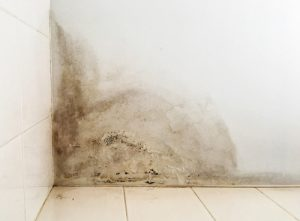 mold growth on ceiling